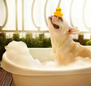 dog-in-bathtub